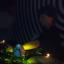 Ecoutes Au Vert / Genève / Aventures sonores au grand air! / Daria @ Motel Campo (Geneva, Switzerland) / Rock the Casbah 26-05-12 part.1  / 1378848712
